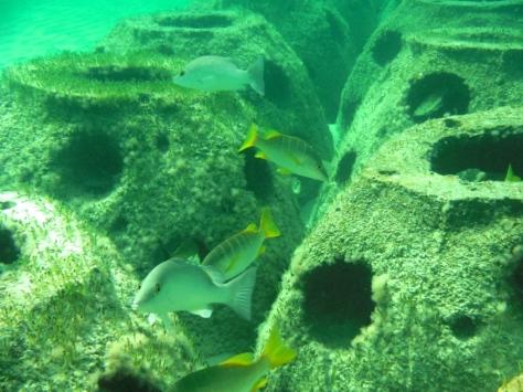 Reef.Programme
